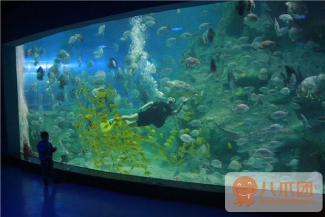 威海华夏城神游海洋世界:仅79元,即享原价160元的老人