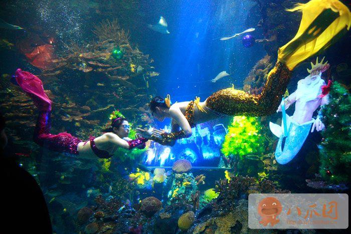 壁纸 海底 海底世界 海洋馆 水族馆 700_467