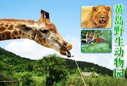 青岛黄岛野生动物园门票一张